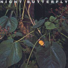 Album cover of Night Butterfly