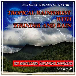 Amadeus: Tropical Rainforest with Thunder and Rain: Natural