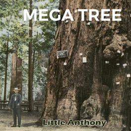 Album cover of Mega Tree