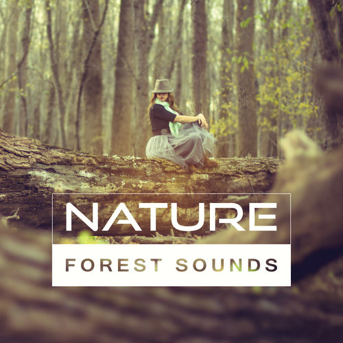 Outside Broadcast Recordings: Nature Forest Sounds – Calm New Age