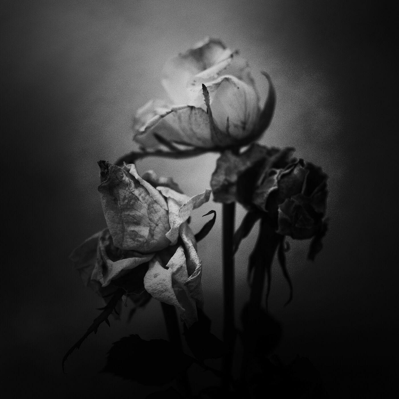 Livealie - Death Blooms [single] (2019)