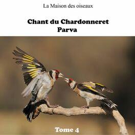 CHARDONNERET PARVA CHANT DE TÉLÉCHARGER
