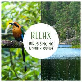 Singing Birds Zone: Relax: Birds Singing & Water Sounds