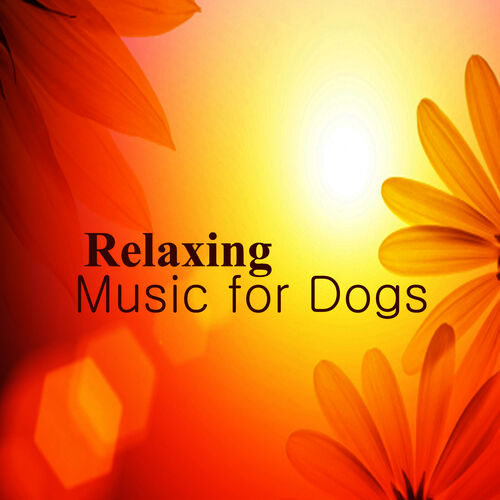 The Piano Music Group: Relaxing Piano Music for Dogs: Smile - Music