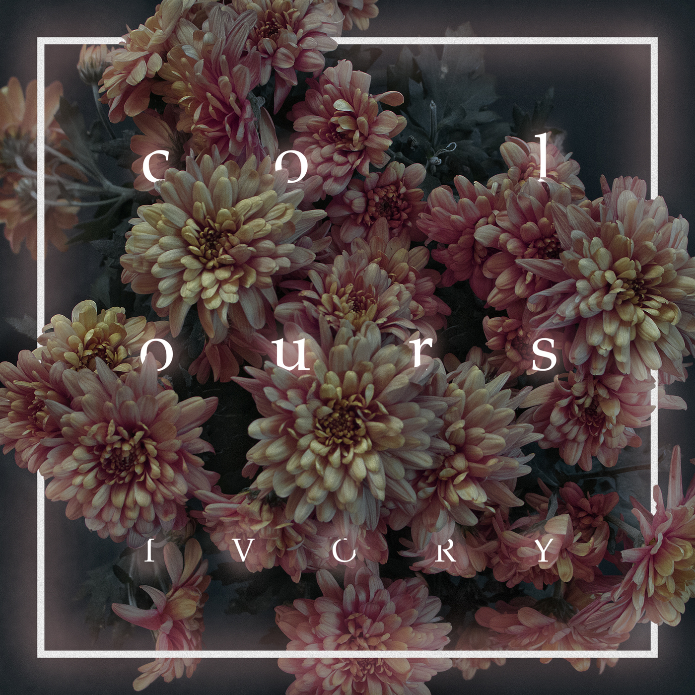 Colours - Ivory (2016)