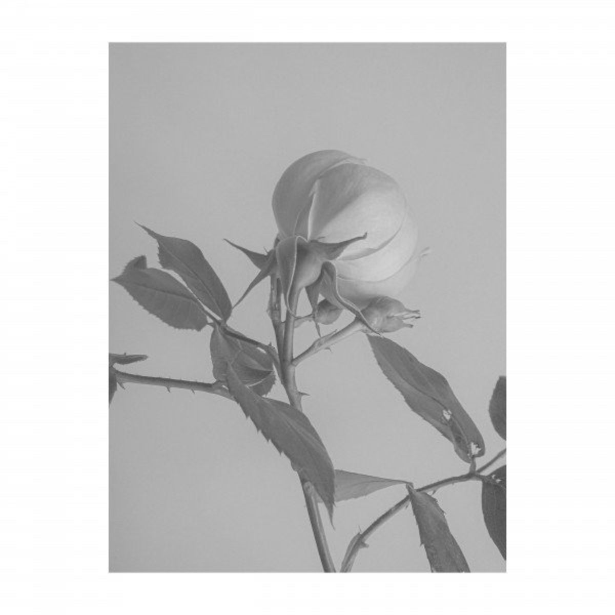 Imminence - Paralyzed (Acoustic) [single] (2020)