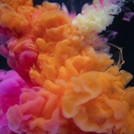Flower Streaming Flowers Healthy