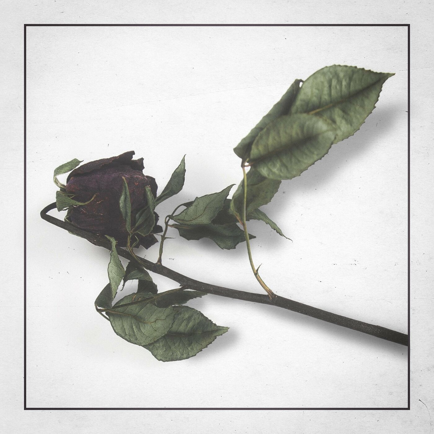 Harroway - Bloom In A Dark Room (2021)