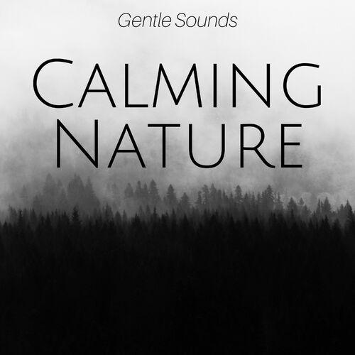 Ryan Sound & Meditation Relaxation Club: Calming Nature