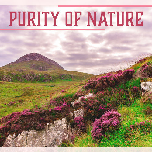 Calm Nature Oasis: Purity of Nature – Collection of Nature