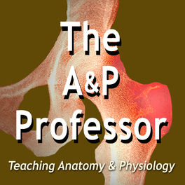Show cover of The A&P Professor